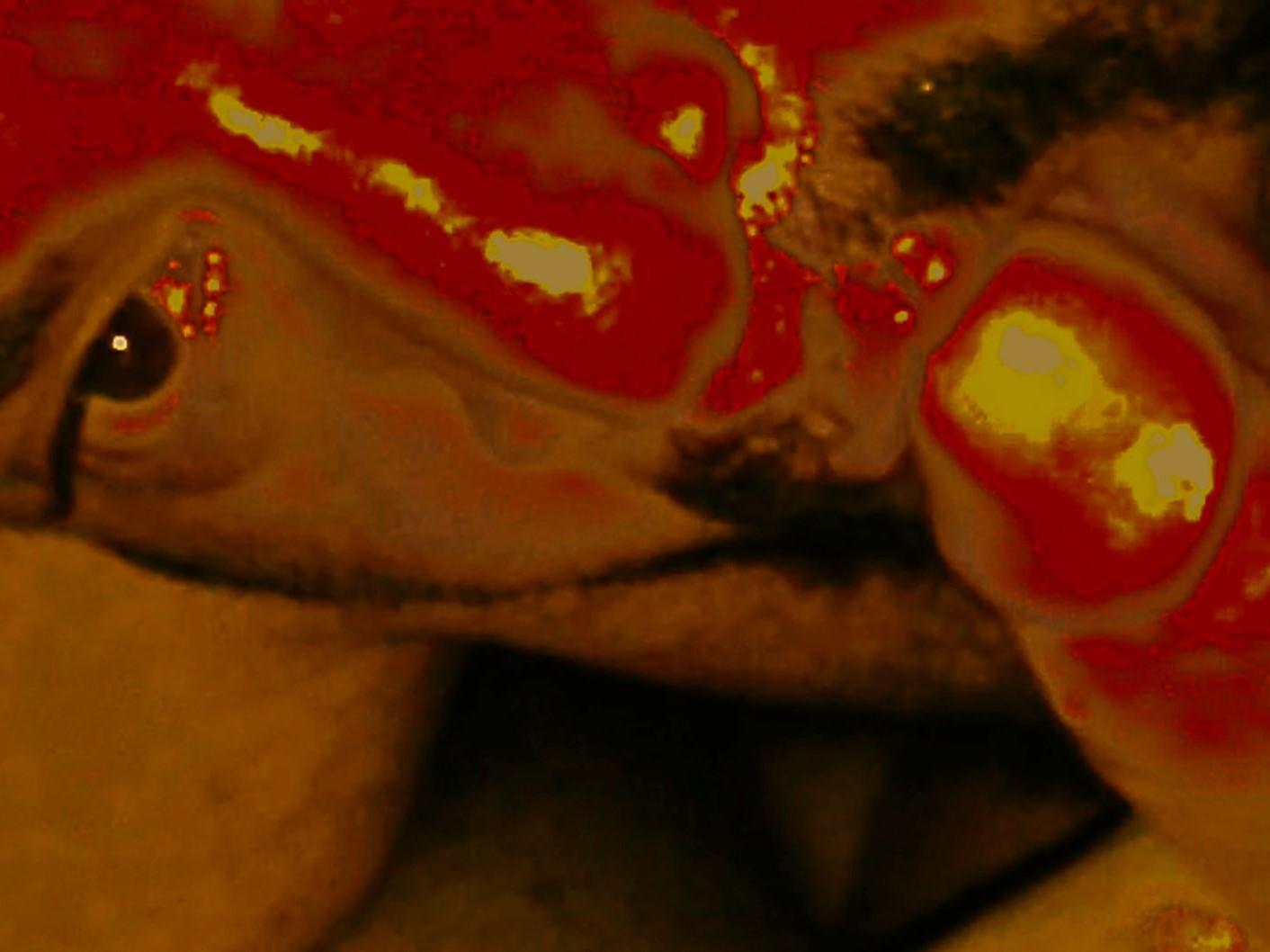 Rodrigo Batista: THE B-SIDE (video-propaganda-art).